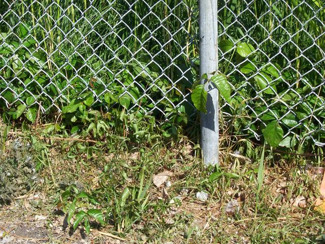 Maîtrise de la végétation nuisible